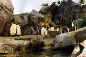 Penguin exhibit at St. Louis Zoo