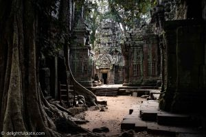Must See in Siem Reap - Quiet Ta Prohm early morning