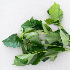 Piper Lolot Leaves (Vietnamese La Lot), often confused with betel leaves