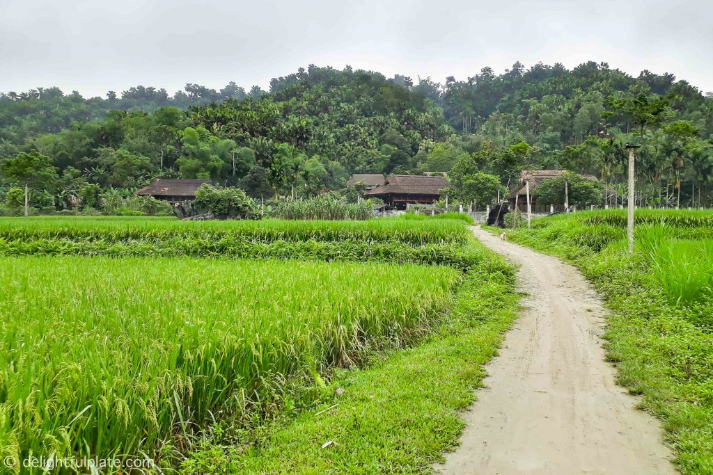 The small road from Xoi Farmstay to Luc Yen Gemstone Market