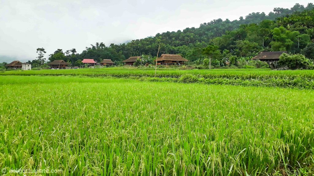 Unspoilt nature surrounding Xoi farmstay, Yen Bai