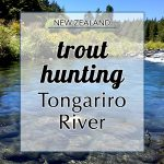 Trout Hunting in Tongariro River and Tips for Fishing in New Zealand