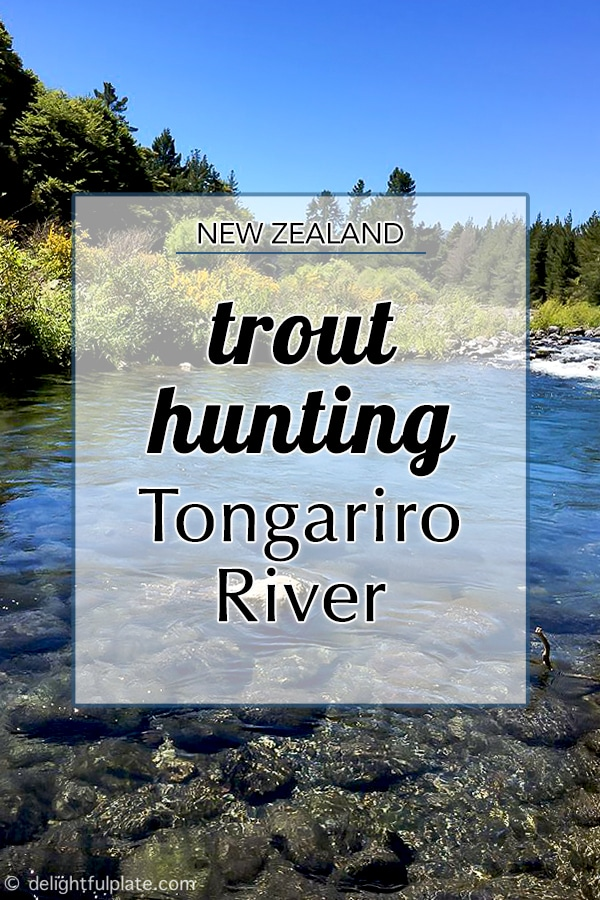 Tongariro River, great place for trout fishing in New Zealand